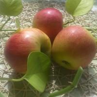 jablka bio lahodnosti