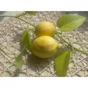 citrony bio lahodnosti-350x350_0