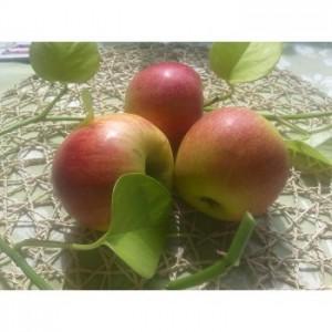jablka bio lahodnosti-350x350_0