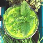 Elixír lahodností aneb divoké zelené smoothie (raw, vegan, bez sacharidů)